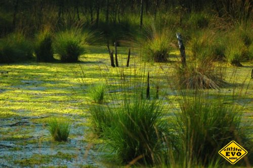 Почему болото засасывает? (Интересные факты)