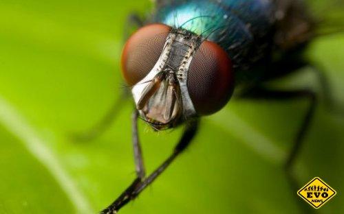 Почему мухи трут свои лапки? (Интересный факт)