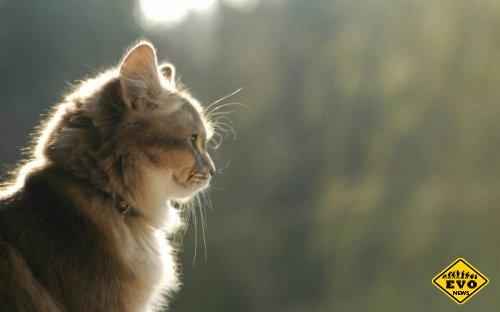 Интересный познавательные факты о кошках