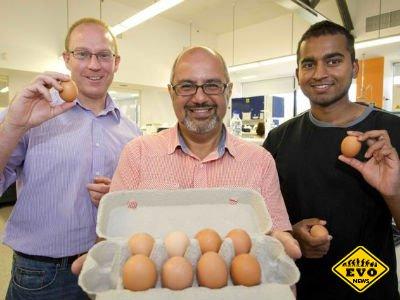 Скоро появятся куриные яйца абсолютно безопасные для аллергиков