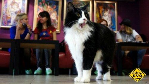 Общение с кошками в лондонском кошачьем кафе