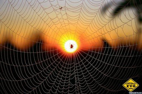 Почему мухи прилипают к паутине, а пауки нет?