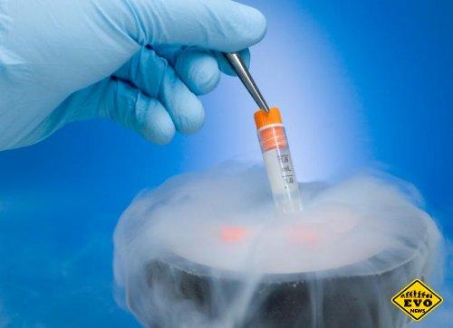 Эксперимент с заморозкой эмбрионов прошел успешно