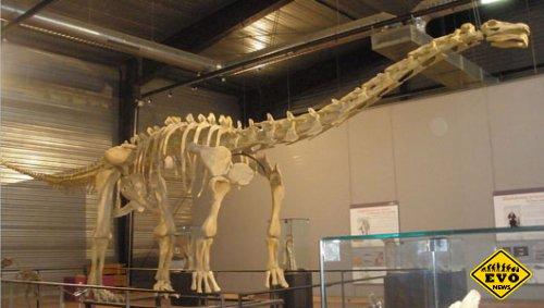 У самого большего на Земле динозавра мозг был размером в теннисный мяч