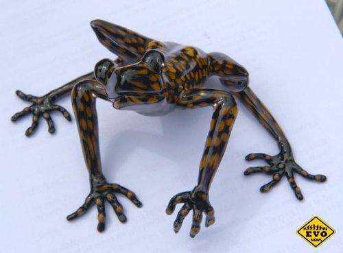 Эквадорская лягушка названа в честь его Высочества