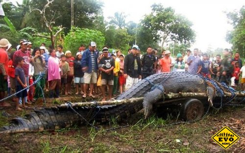 Среди самых больших крокодилов появился новый рекордсмен