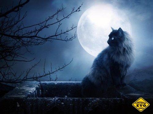 Интересные и смелые догадки о луне