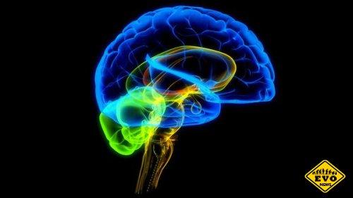 Синий цвет стимулирует работу головного мозга