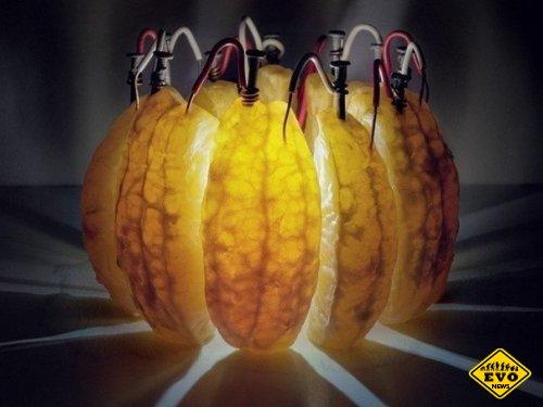 Апельcина вырабатывает электричество!!! (Факт)
