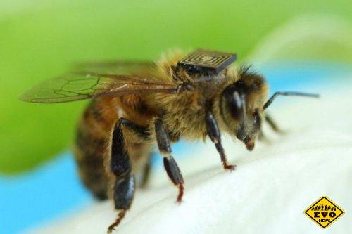 Пчелы-киборги (Хайтек новость)
