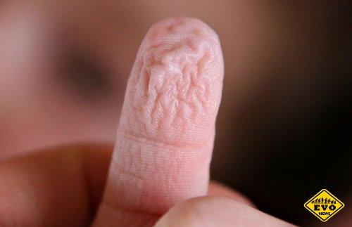 Почему кожа на кончиках мокрых пальцев морщится?