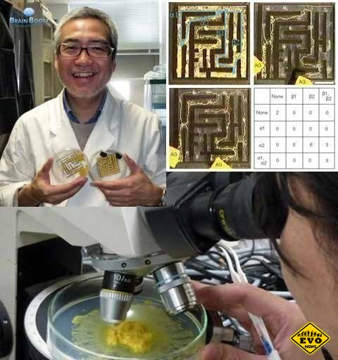 Целеустремленный гриб - интересный экспиримент