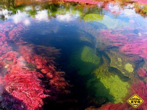 Каньо Кристалес - «река пяти цветов».