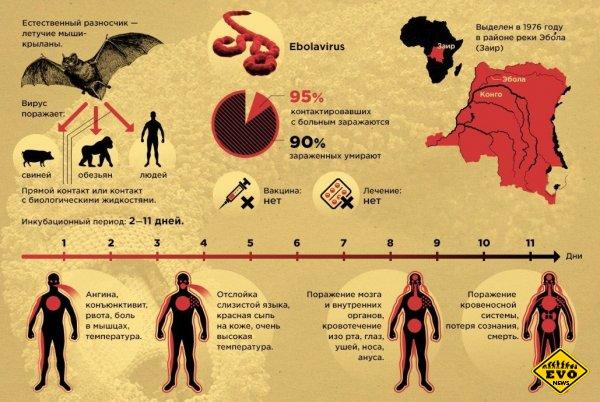 Ебола - смертельный вирус и его симптомы (Инфографика)