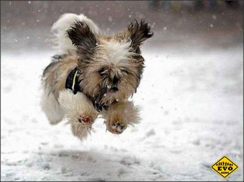 Зимние опасности для собаки