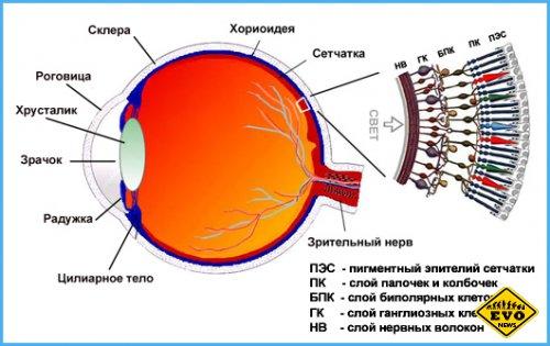 Глаз человека имеет около 576 мегапикселей