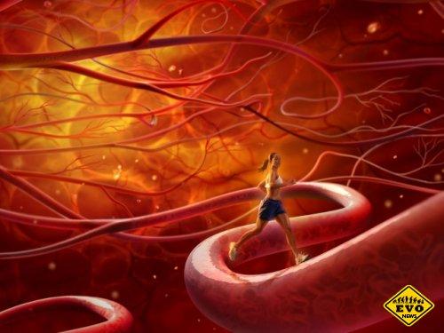 В теле человека 160 000 км кровеносных сосудов