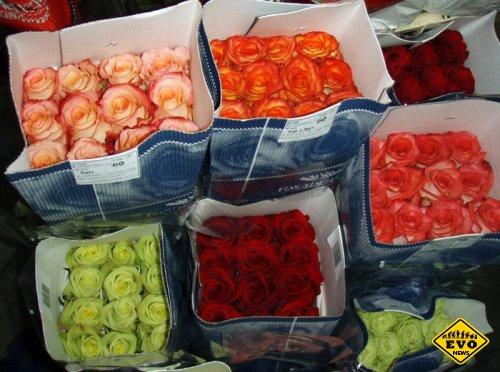 Перевозка цветов в Москве