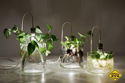 Правила искусственного освещения для растений