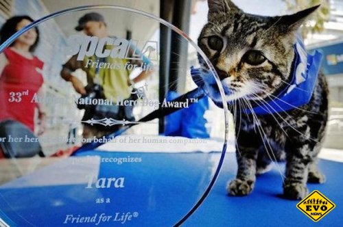 Tara - кошка которая спасла ребёнка от собаки