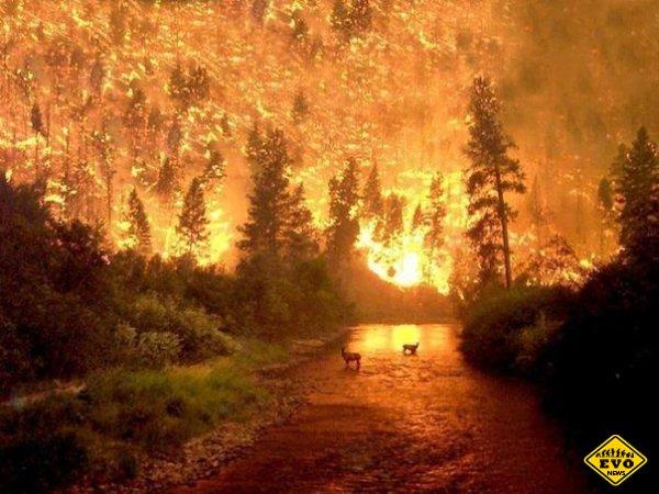 Пожар в Национальном парке Биттеррут 2000 год