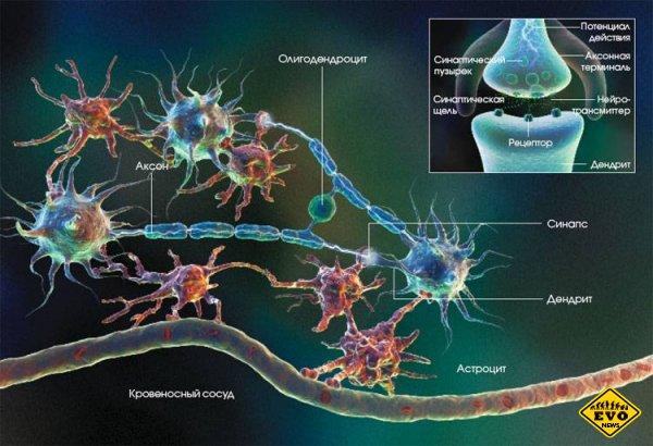 Активность нейронов головного мозга в анимации