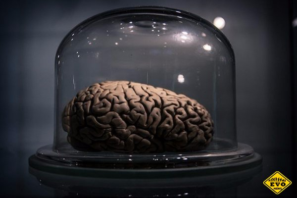 33 удивительных факта о человеческом мозге