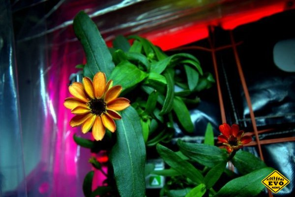 На МКС распустился цветок