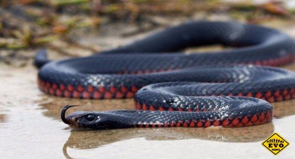 Черная мамба - самая быстрая змея на Земле