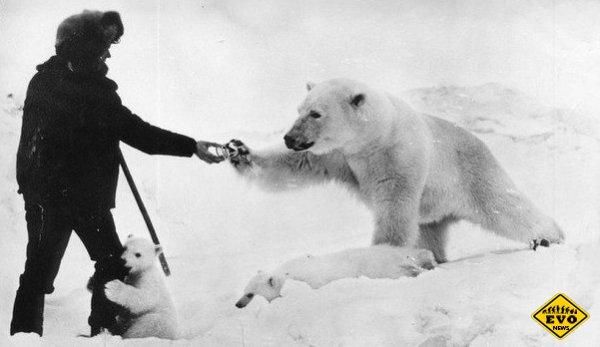 Пограничники, сгущенное молоко и медведица с малышней