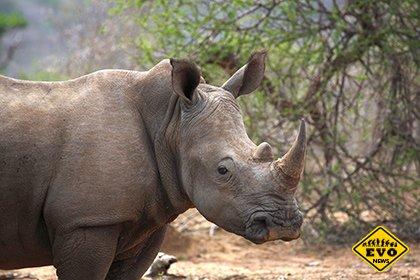 Ученые определили обреченные на вымирание виды животных