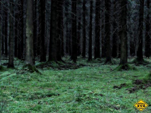 Зловещий лес