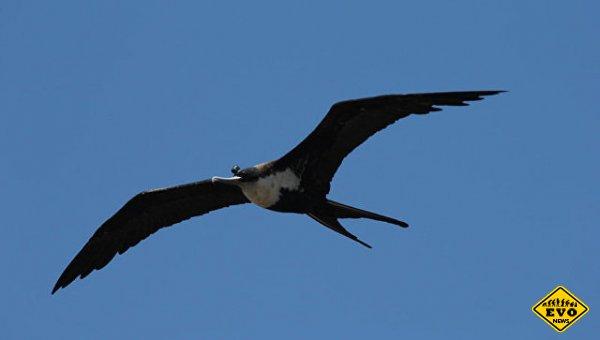 Ученые доказали, что птицы могут спать в воздухе