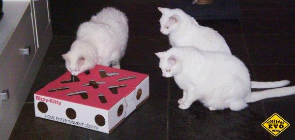 Ученые призвали затруднять кошкам доступ к еде