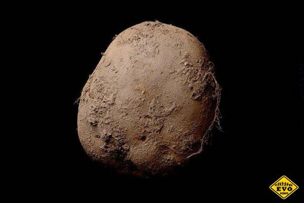 Фото картошки за 1 миллион долларов