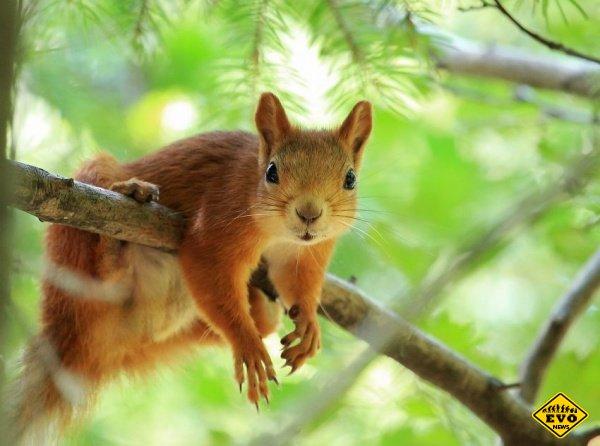 10 необычных фактов о животных
