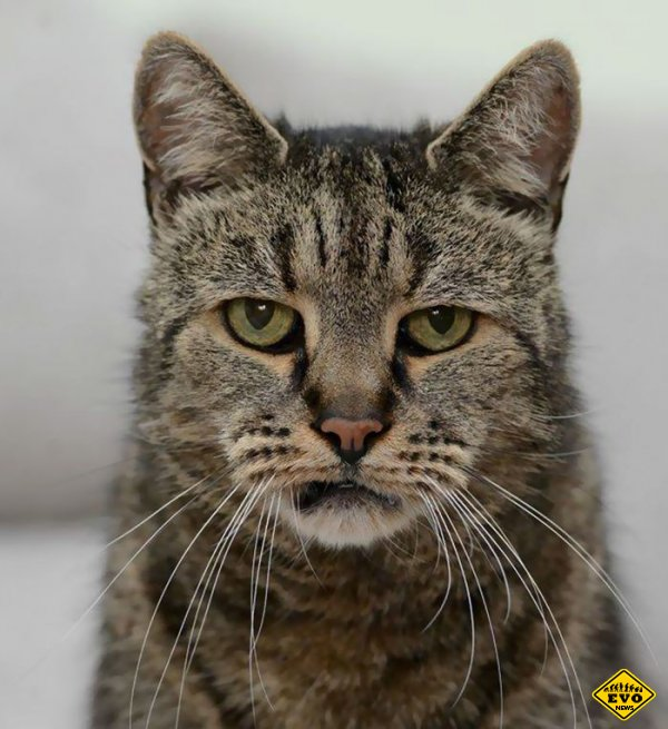 Кот Nutmeg отпраздновал свой 31-й день рождения