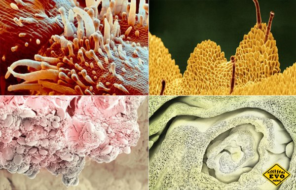 Еда под микроскопом - это интересно!