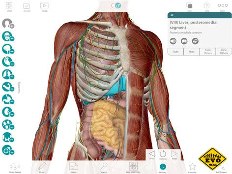 Видеоуроки по анатомии