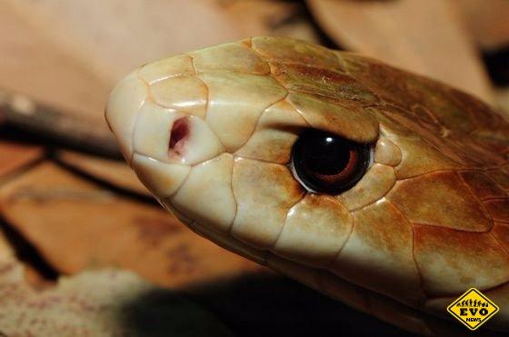 Опасная змей для человека змеи