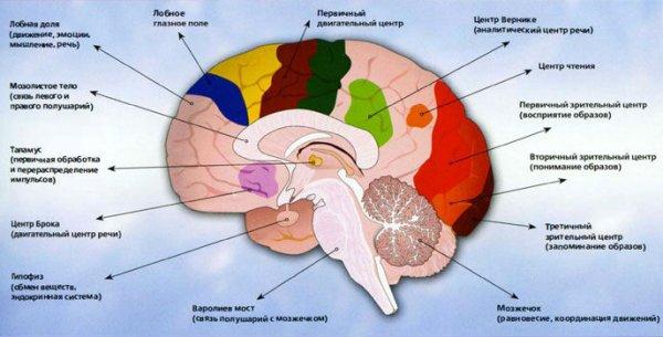 7 причин, из-за которых ваш мозг отказывается работать