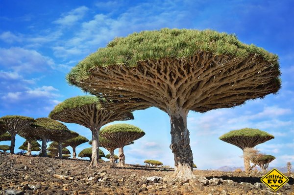 16 самых удивительных деревьев на планете