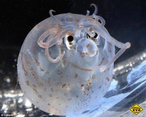 10 необычных глубоководных существ