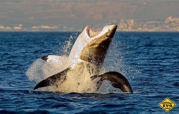 Почему большая белая акула черного цвета?