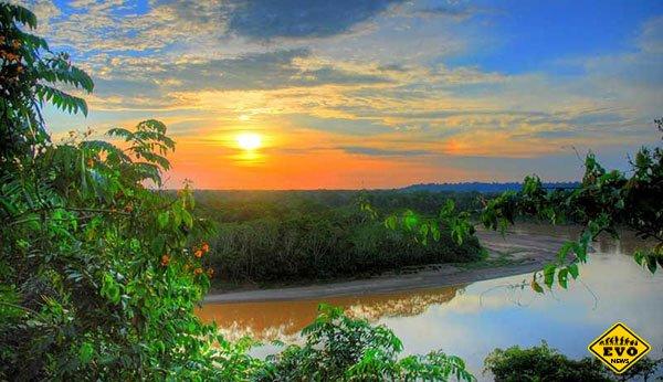 Факты о тропических лесах Амазонки