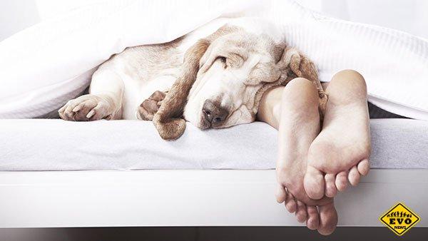 Одиннадцать главных мифов про сон