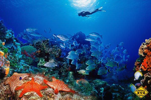 Интересные факты про коралловые рифы