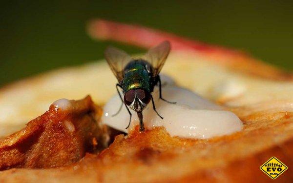 Что на самом деле происходит с вашей едой, когда на нее садится муха?