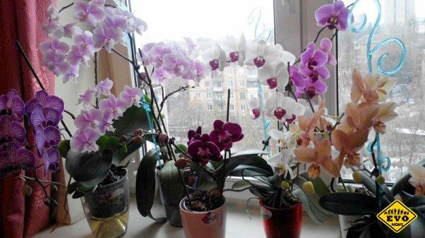 Девушки, никогда не держите орхидею дома! В офисе — можно, дома —  нет