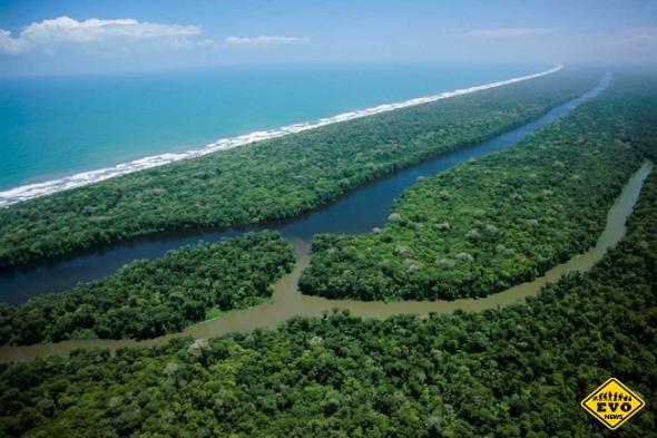 Коста-Рика. Национальный парк Тортугеро